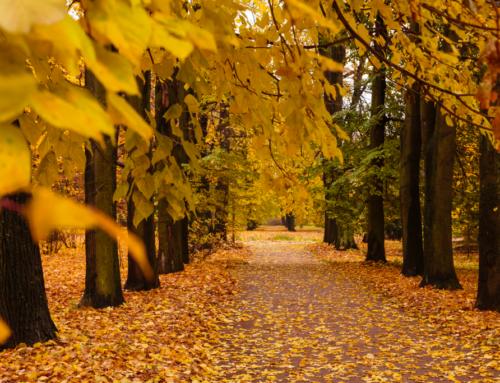 Outono é estação marcada por comemorações tradicionais e curiosas
